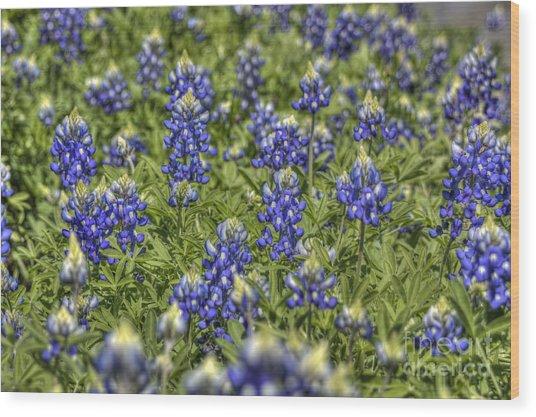 Heavenly Bluebonnets Wood Print