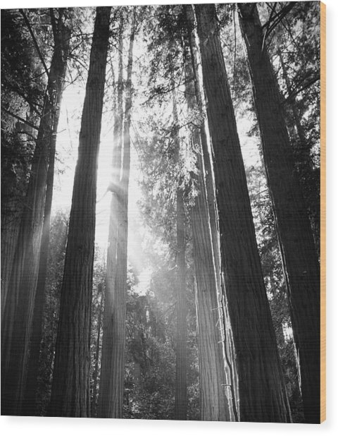 Heavenly Forest Wood Print