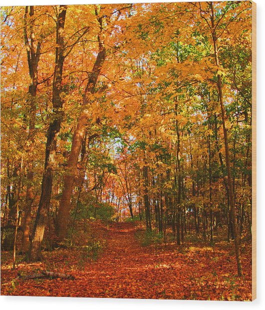 Heavenly Pathway Wood Print by James Hammen