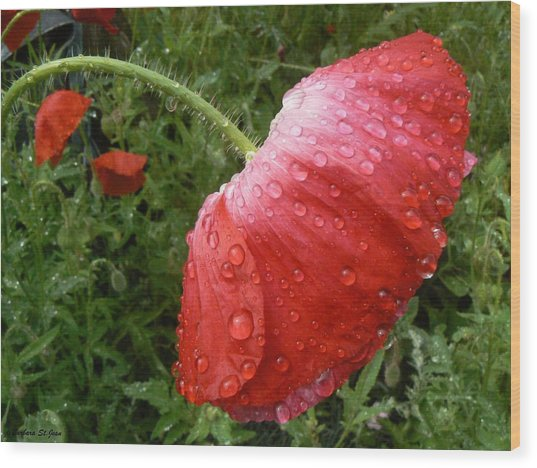 Heavy Head Poppy Wood Print