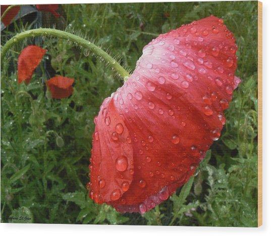Heavy Head Poppy Wood Print