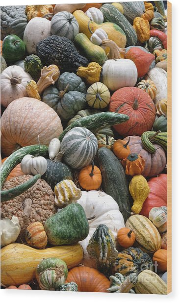 Heirloom Squash Tower V. Wood Print by Vinnie Oakes