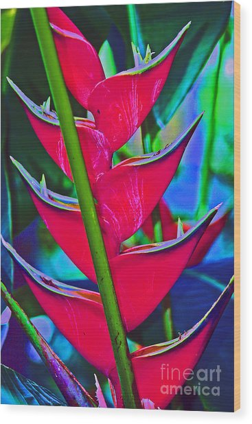 Heliconia Abstract Wood Print