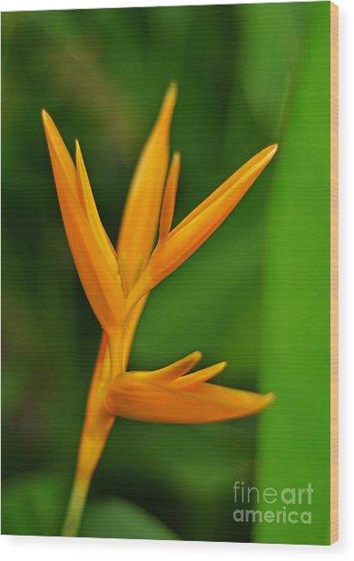 Heliconia Photo Wood Print
