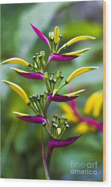 Heliconia Subulata II Wood Print