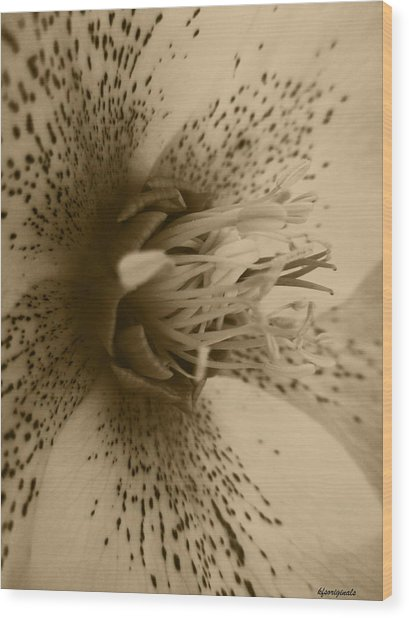 Helle 1 Wood Print