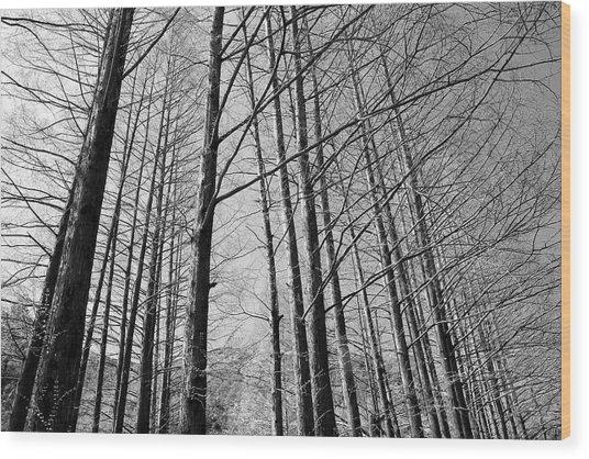 Hello Trees Wood Print by Phoresto Kim