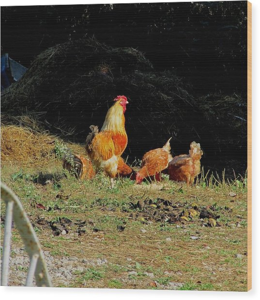 Henry And His Girls Wood Print by Carol Hoffman