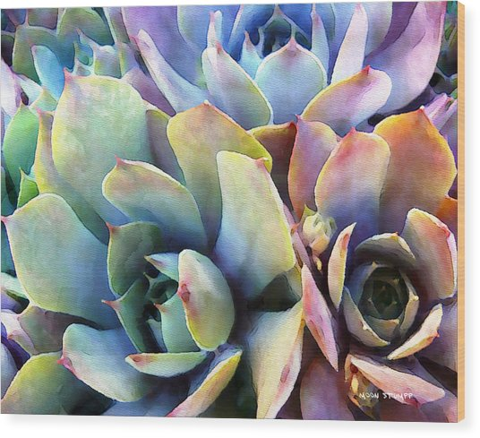 Hens And Chicks Series - Soft Tints Wood Print