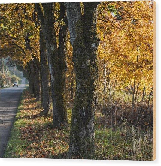 Heritage Sugar Maple Trees II Wood Print