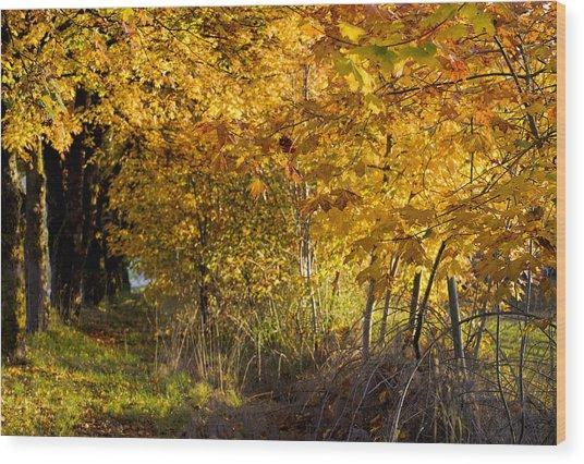 Heritage Sugar Maple Trees Wood Print