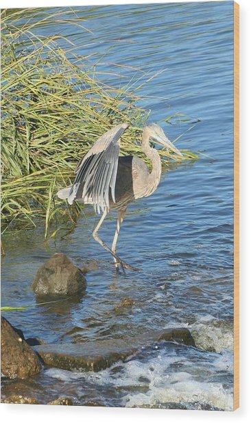 Heron Dance Wood Print