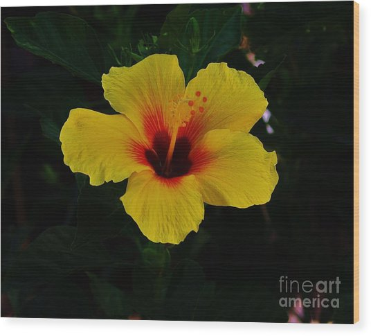 Hibiscus Stand Out  Wood Print