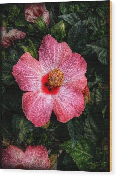 Hibiscus Sunset Wood Print
