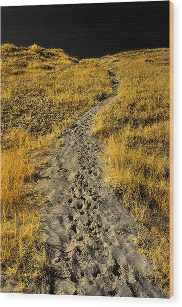 Hidden Beach Dune Path Wood Print