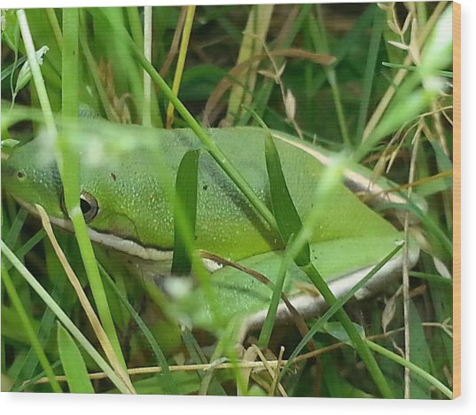 Hidden Frog Wood Print