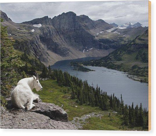 Hidden Lake Mountain Goat Wood Print by Robert Yone
