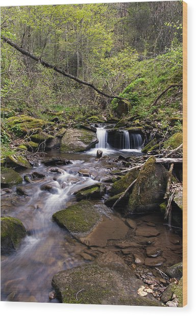 Hidden Streambed  Wood Print by David Lester