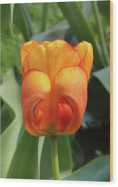 Hide-n-seek Tulip Wood Print