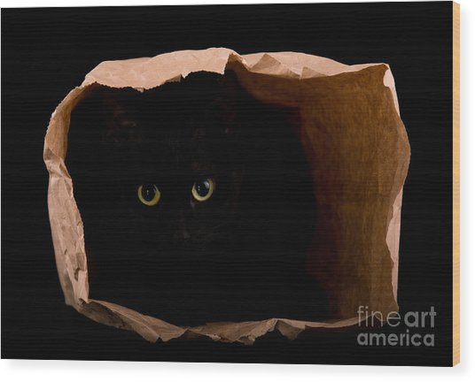Hiding In The Paper Bag Wood Print