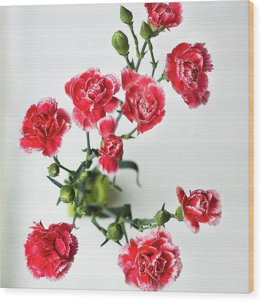 High Angle View Of Red Carnations Wood Print by Kateryna Kyslyak / Eyeem