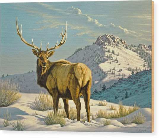 High Country Bull Wood Print