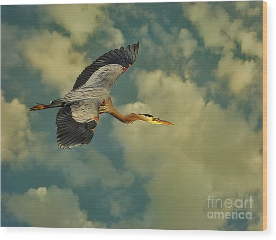High Flying Great Blue Heron Wood Print