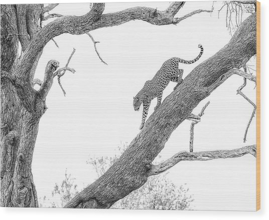 High Key Leopard Wood Print by Jaco Marx