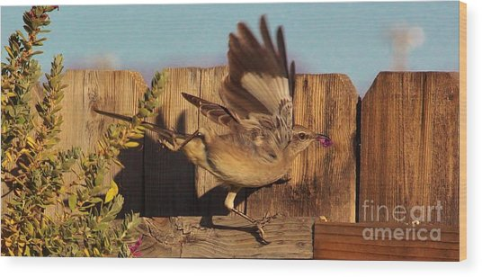 Hightail It Out Of There Wood Print