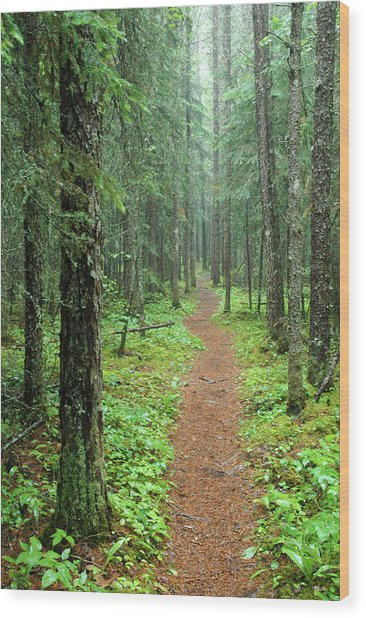 Hike To White River In Pukaskwa National Park Wood Print