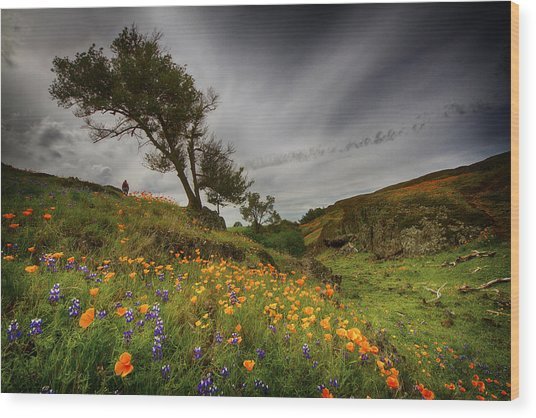 Hiking On Table Mountain Wood Print