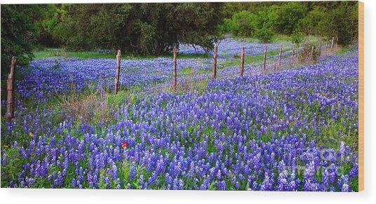 Hill Country Heaven - Texas Bluebonnets Wildflowers Landscape Fence Flowers Wood Print