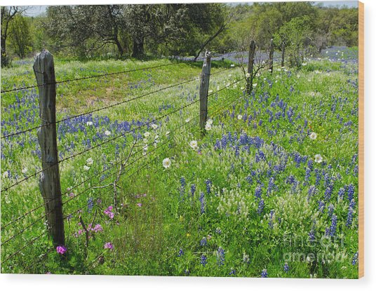 Hill Country Wildflowers Wood Print by Cathy Alba