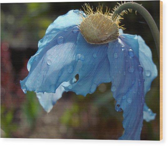 Blue Allure Wood Print
