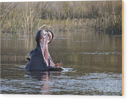 Hippo Yawning Wood Print