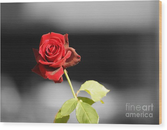 Hiroshima Rose Wood Print