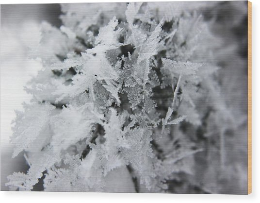Hoar Frost In November Wood Print
