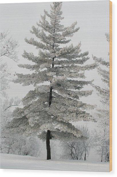 Hoarfrost Pine Tree Wood Print