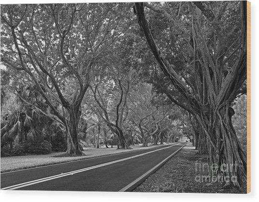 Hobe Sound Bridge Rd. West II Wood Print