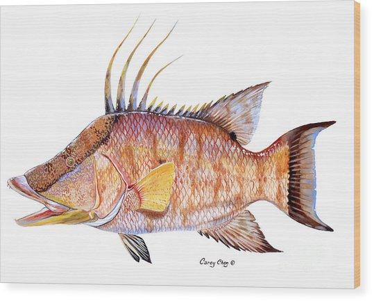 Hog Fish Wood Print