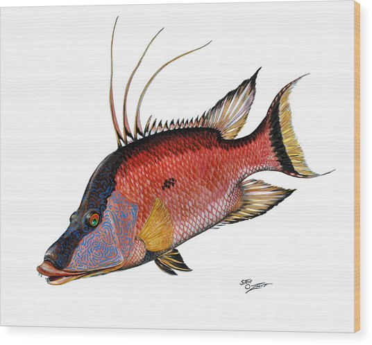 Hogfish On White Wood Print