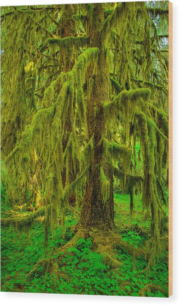 Hoh Rainforest Heavy Weight Wood Print
