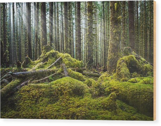 Hoh Rainforest Log Jam Wood Print