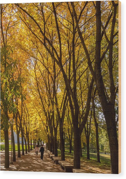 Wood Print featuring the photograph Holding Hands Under Tree Canopy by David Coblitz