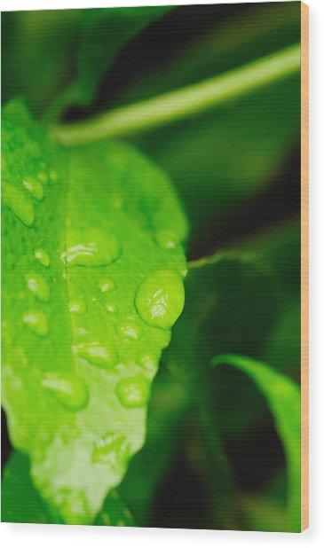 Holding Raindrops Wood Print