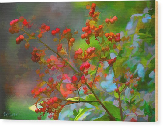 Holly Berry Wood Print