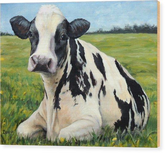 Holstein Cow Relaxing In Field Wood Print