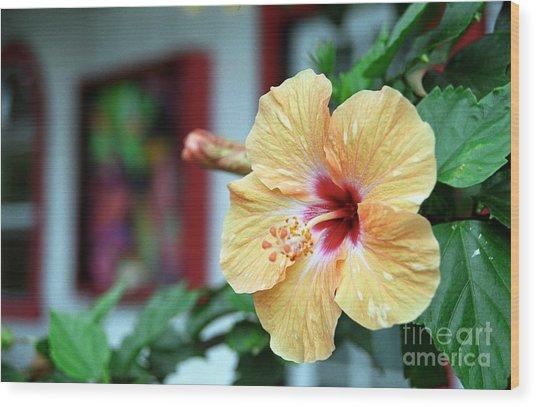 Holualoa Hibiscus Wood Print