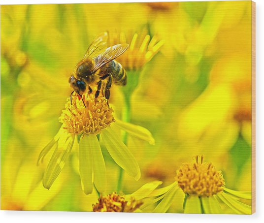 Honey Colours Wood Print