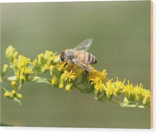 Honeybee On Goldenrod Twig Wood Print